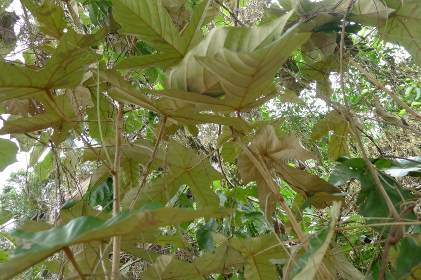 the reverse side of the leaves