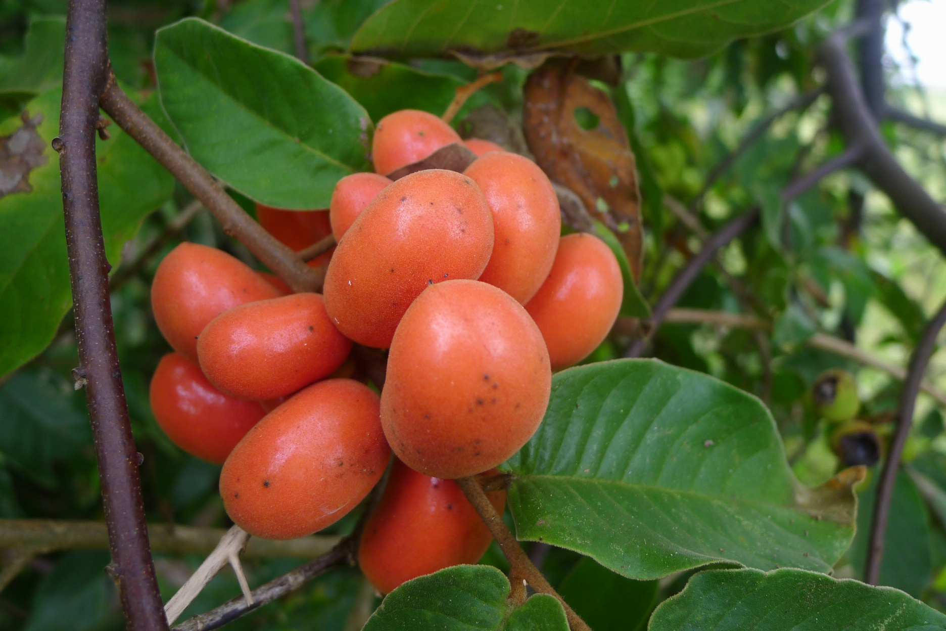 ripe fruit