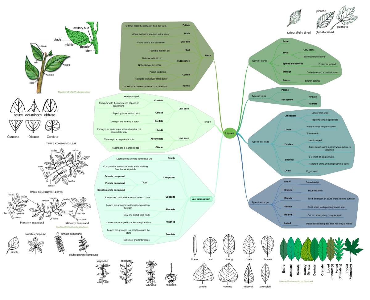 Basic Botany – Learn the Lingo!