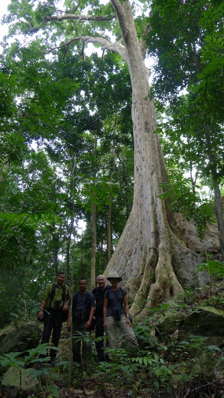 Not on the farm! Beautiful big tree that we saw in Cagayan de Oro.