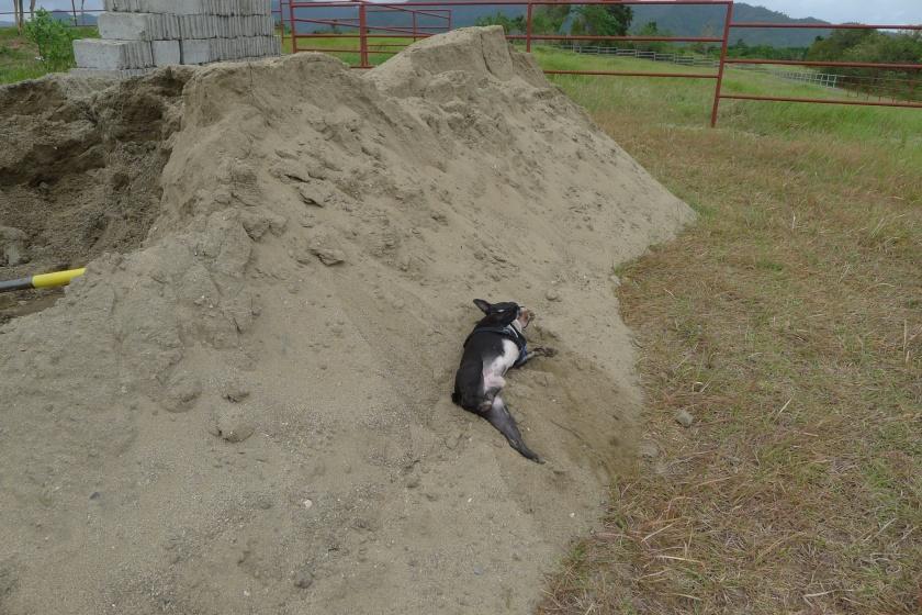 Barkley enjoying the cottage construction