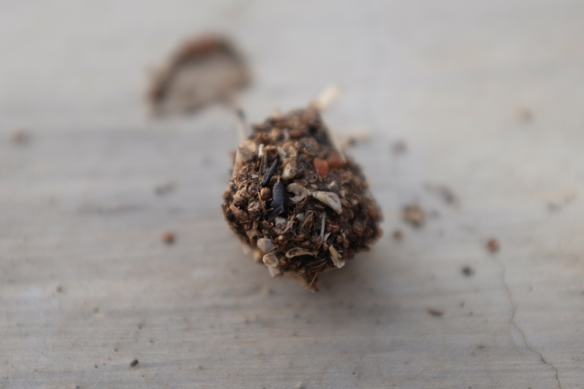 another view of the owl pellet