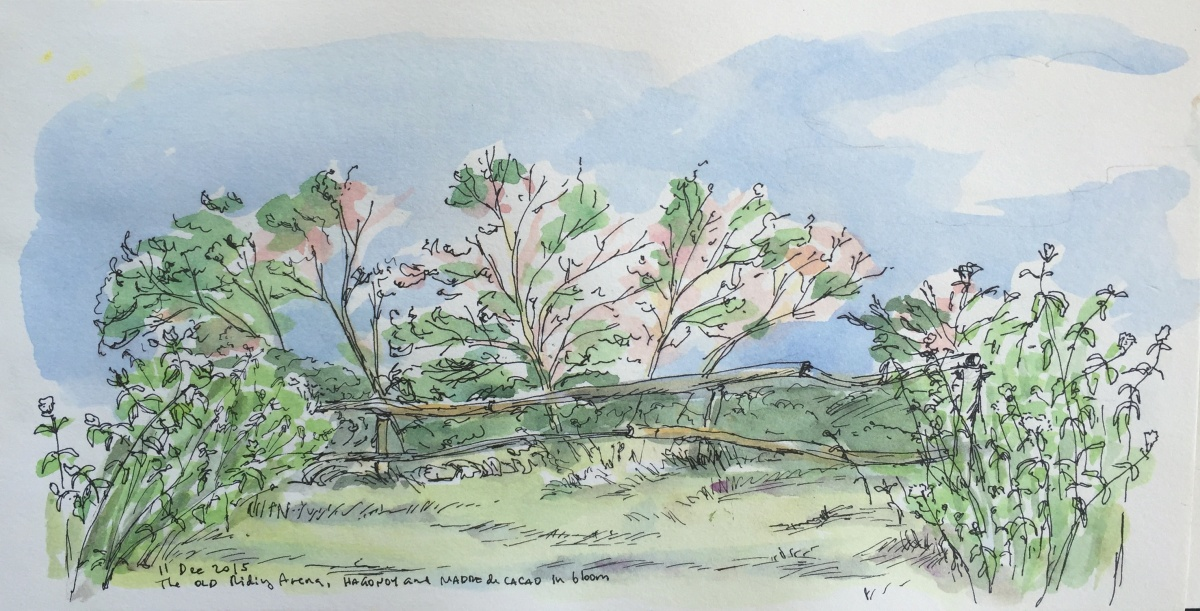 Outdoor Sketches