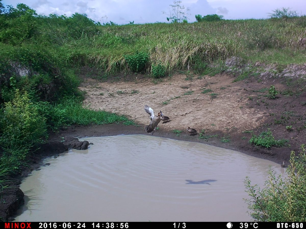 Trail Camera Test