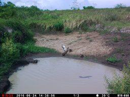 Trail Camera Test