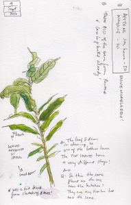 sept-9-plant