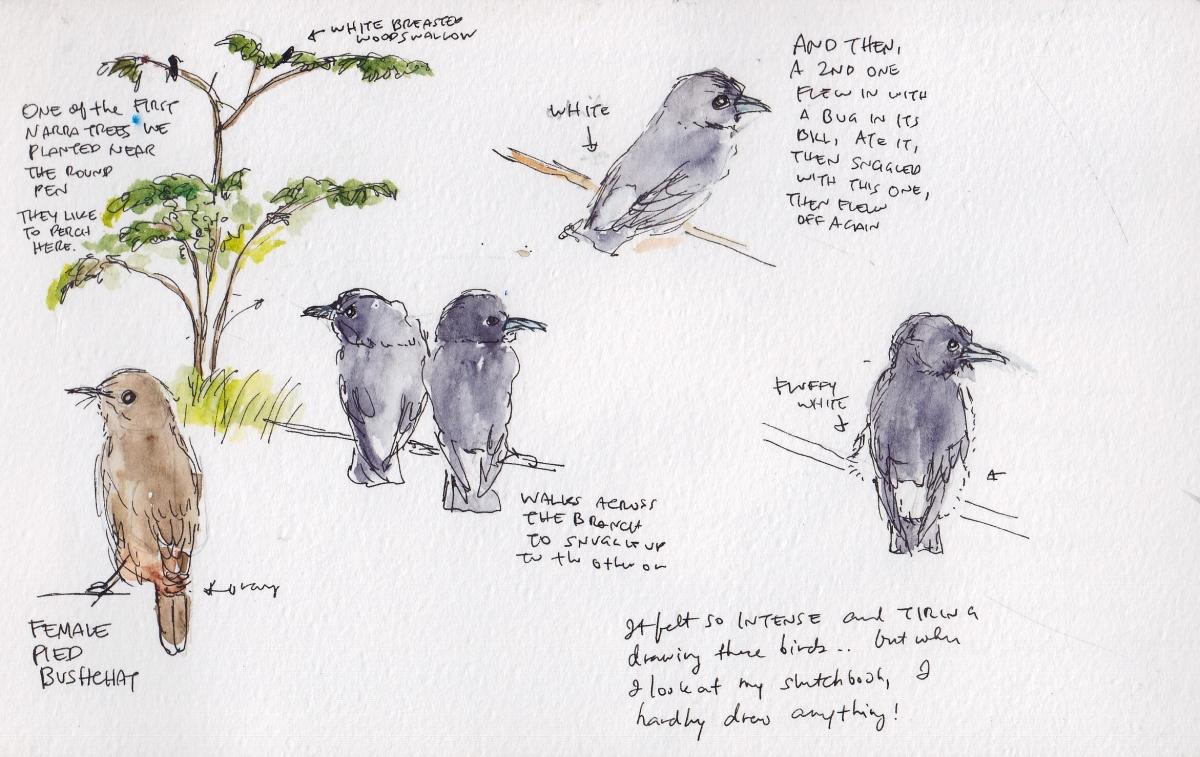 Sketching the Birds!