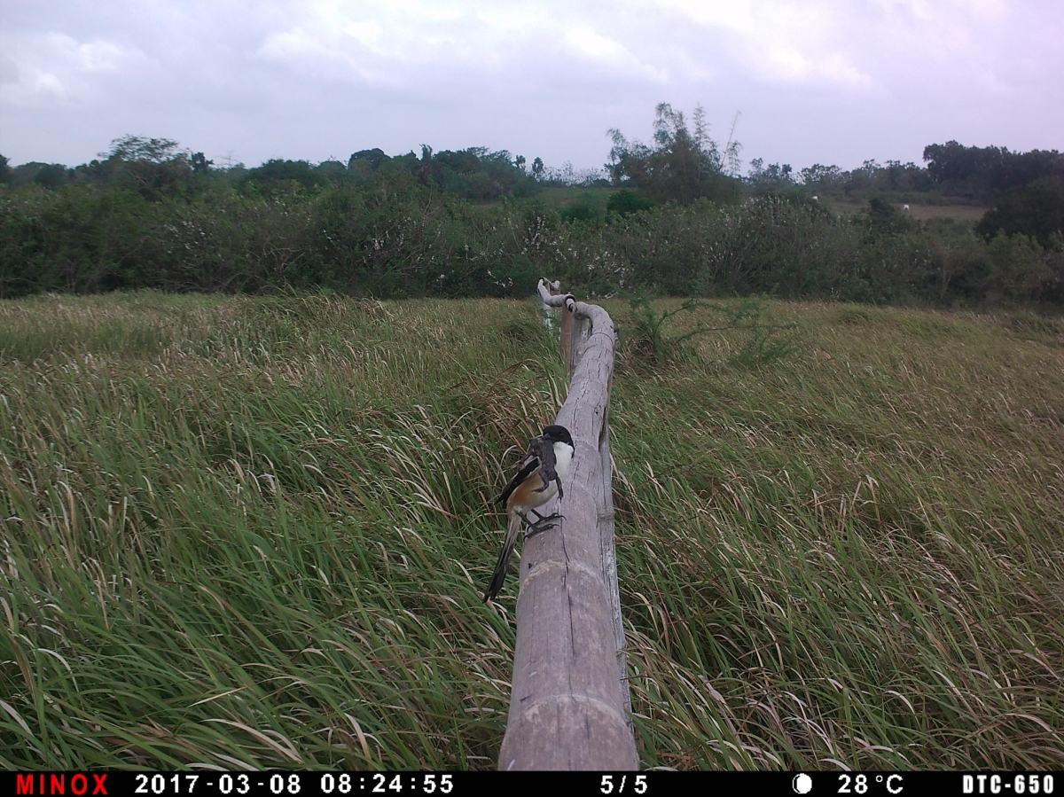 Wildlife Camera by the Bamboo Fence