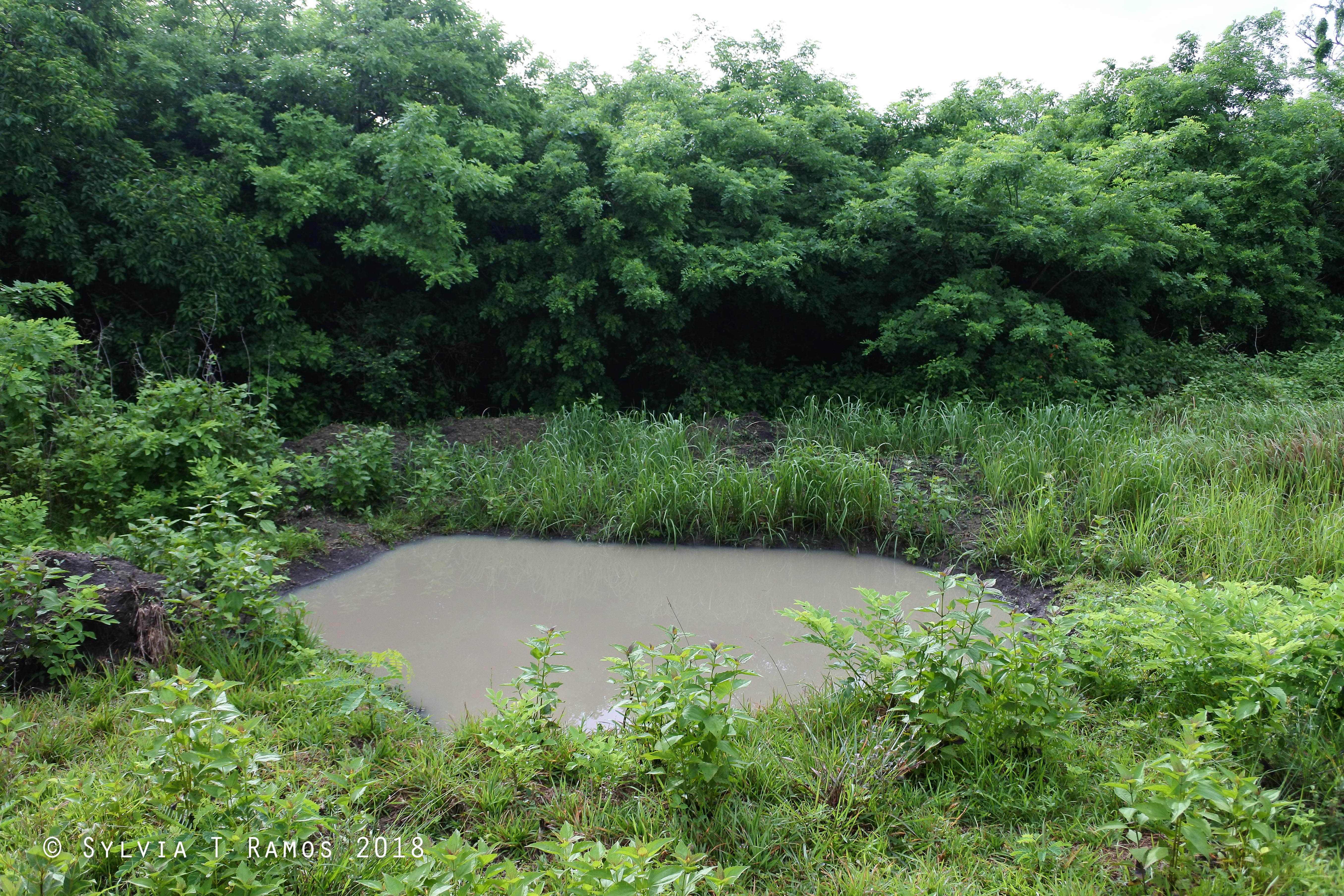 pond 5 after.jpg