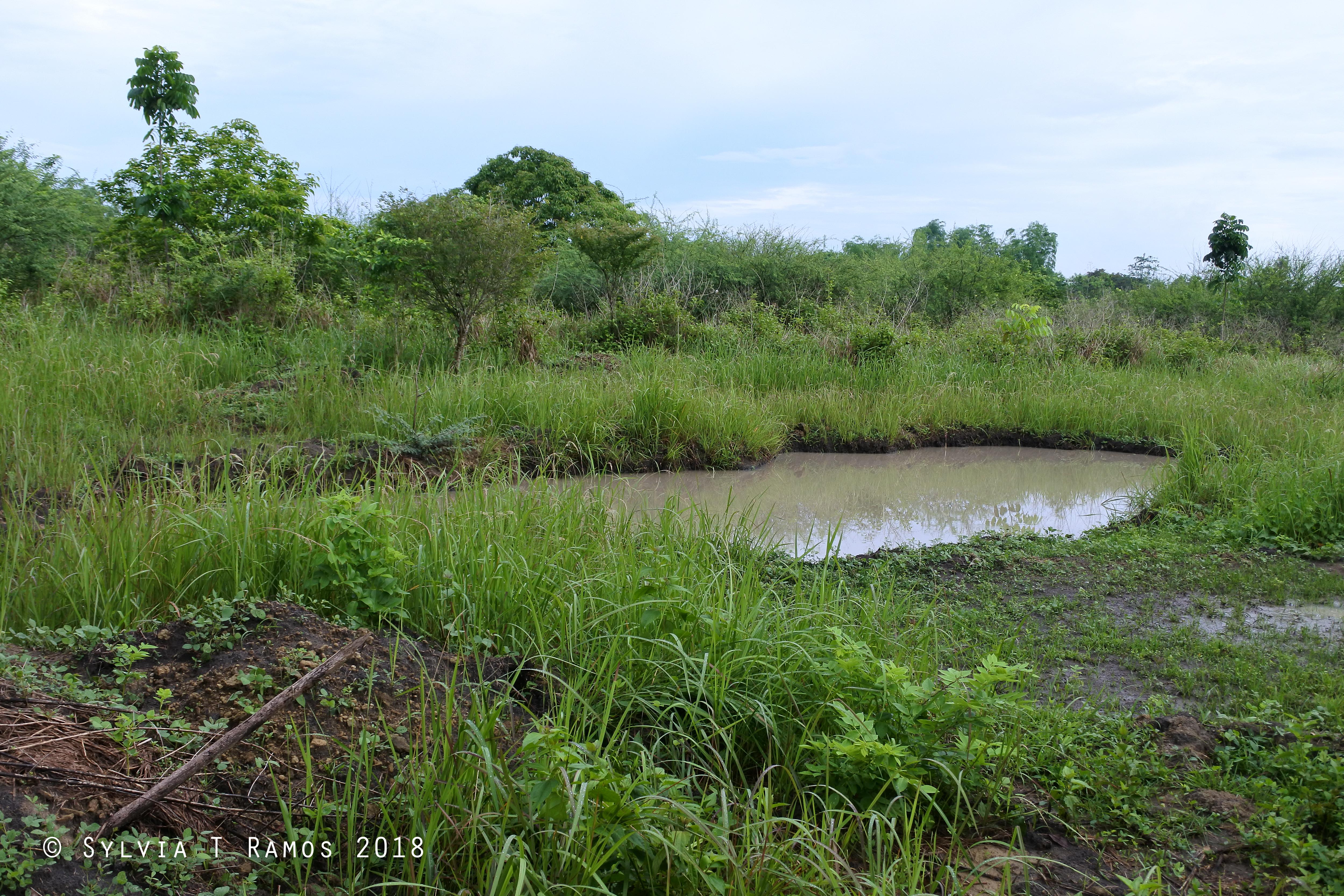 pond 7 after.jpg