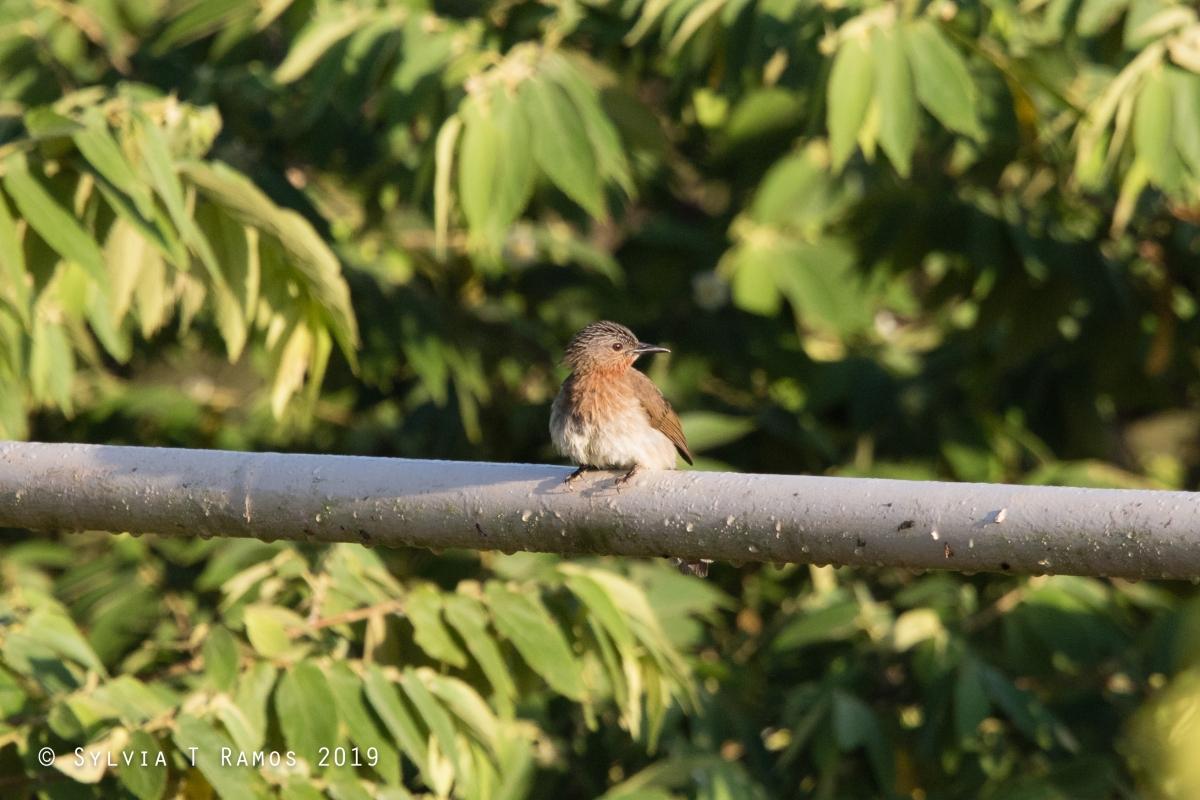 Birds Doing NewThings