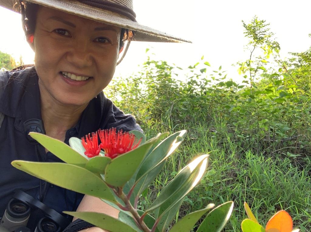 Mangkono tree flowering